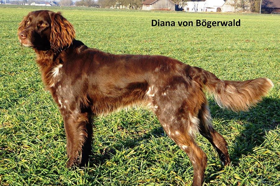 Diana-von-Bögerwald