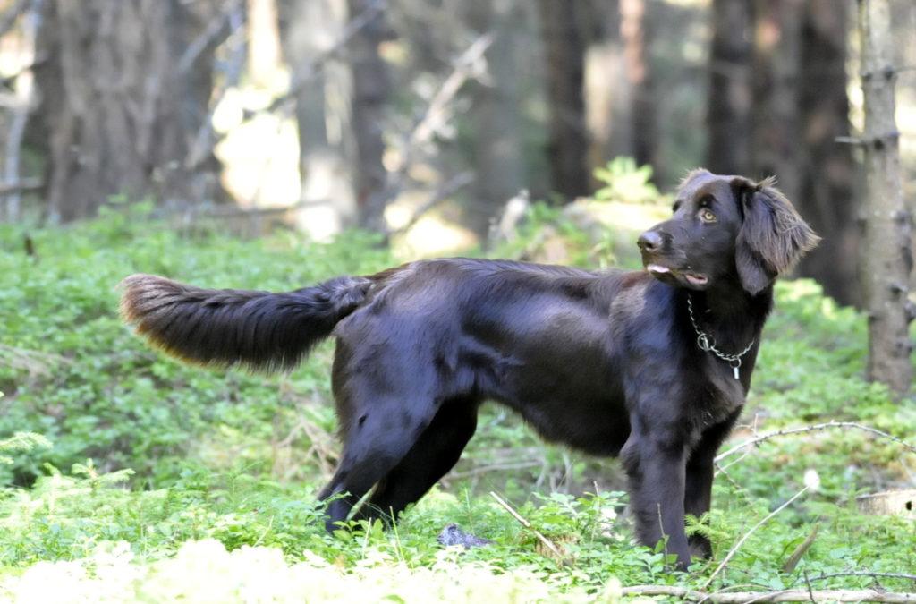 Diana-vom-Waldviertlerforst